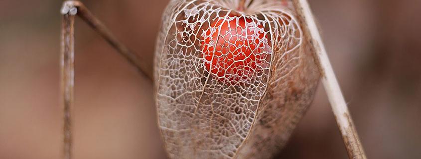 Inelca Recubrimientos metálicos imagen decriptiva naturaleza